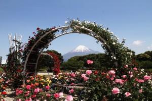 富士市の市民の花「バラ」