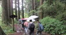 旧東海道杉並木を散策