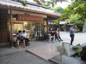 市内観光(柿田川公園)