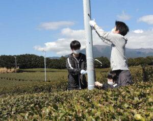茶畑で作業